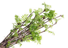 The first spring  branches Stock Photos