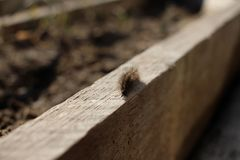 Caterpillar crawling on the Board stock photo