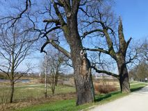 The first spring days. The first spring days in the city park royalty free stock image