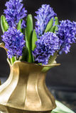 First spring flower - blue hyacinth in brass vase Royalty Free Stock Images