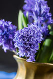 First spring flower - blue hyacinth in brass vase Stock Images