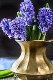 First spring flower - blue hyacinth in brass vase Stock Image