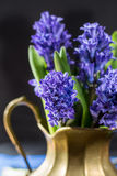 First spring flower - blue hyacinth in brass vase Stock Photography