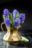 First spring flower - blue hyacinth in brass vase Royalty Free Stock Image