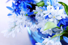 First spring flowers. Blue bouquet of first spring flowers closeup Stock Images