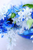 First spring flowers. Blue bouquet of first spring flowers closeup Stock Photo