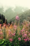 First spring flowers on Alps mountains background in cloudy day. Copy space. Spring, summer, travel concept in tendy. Green colors Stock Image