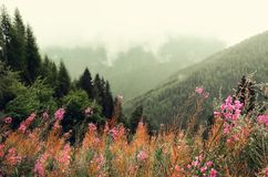 First spring flowers on Alps mountains background in cloudy day. Copy space. Spring, summer, travel concept in tendy. Green colors Stock Photos