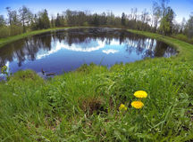 The first spring flowers dandelions on the bank of the lake, a lens a fish eye Stock Photo