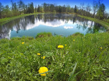 first spring flowers dandelions on the bank of the lake, a lens a fish eye Royalty Free Stock Image