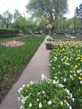 First spring flowers in Gorky park, Moscow. Gorky park is situated in the centre of Moscow, Russia Stock Image