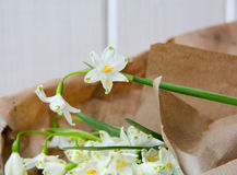 The first spring flowers in paper. First fresh spring flowers are white bells bouquet wrapped in paper Royalty Free Stock Images