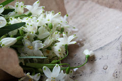The first spring flowers in paper. First fresh spring flowers are white bells bouquet wrapped in paper Royalty Free Stock Photo