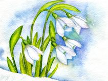 First spring flowers. The first spring snowdrops against the background of snow and cloudy sky. Hand-painted watercolor illustration and paper texture Stock Photos