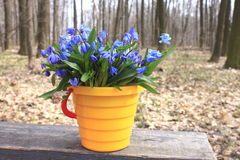 First spring flowers Royalty Free Stock Images