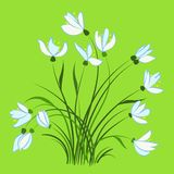 First spring flowers, snowdrops. Beautiful vector design element Stock Photography
