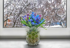 The first spring flowers - snowdrops are in a vase on a windowsill Royalty Free Stock Photography