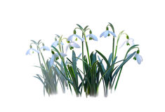First spring flowers Stock Images