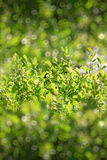 First spring fresh leaves. Blooming landscape, background in spr Stock Photography
