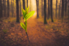 First spring green Royalty Free Stock Photo