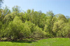The first spring greens over the small river Royalty Free Stock Images