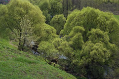 The first spring greens on the small river. The small river Rozhajka near Moscow in the May, surrounded with a bush and the trees covered with the first bright stock photo