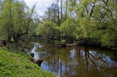 The first spring greens on the small river. The small river Rozhajka near Moscow in the May, surrounded with a bush and the trees covered with the first bright stock image
