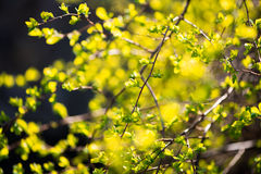 First spring greens stock photo