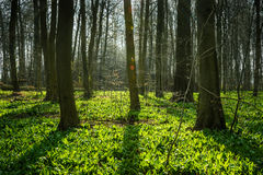 First spring light Royalty Free Stock Images