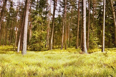 First spring sunshine in the woods in Macha's land in czech nature Stock Images