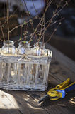 First spring twigs in bottles in basket with garden pruner Royalty Free Stock Image