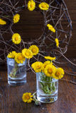 First spring yellow flowers Royalty Free Stock Images