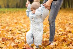 First steps of little kid in autumn park. Mother teaching her cute little son to walk. stock images