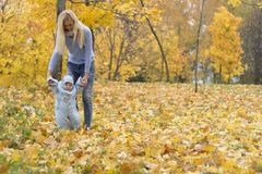 First steps of little kid in autumn park. Mother teaching her cute little son to walk. Stock Image