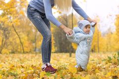 First steps of little kid in autumn park. Mother teaching her cute little son to walk. royalty free stock photography