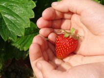 First strawberry Stock Images