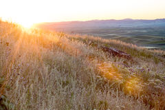 First sun rays paint warm light on farmland Stock Photography