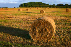 First sunlight on bales of straw in the field Stock Photography