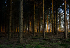 First sunlight in forest Stock Photography