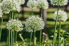 The first Sunny summer day in St. Petersburg. Flowers and plants in Peterhof royalty free stock photos