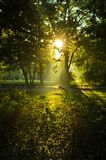 First sunrays at autumn morning in Topcider park, Belgrade royalty free stock image
