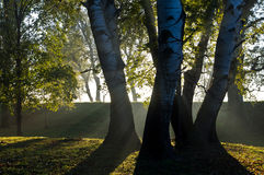 First sunrays on trees thru the morning fog Stock Photos