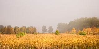 The first sunshine breaks through the mist Stock Photos