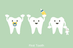 First teeth. Dental cartoon vector, baby tooth - first teeth concept Royalty Free Stock Photography