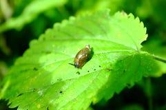 First walk a little snail Stock Photography