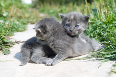 First walk of small kittens Royalty Free Stock Photos