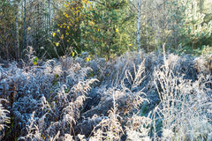 First winter frost in the country Stock Image