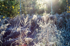 First winter frost in the country Royalty Free Stock Photo