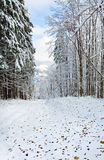 First winter snow and last autumn leafs in forest Stock Photography