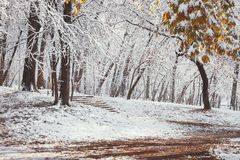 First winter snow and last autumn leaves Stock Photography